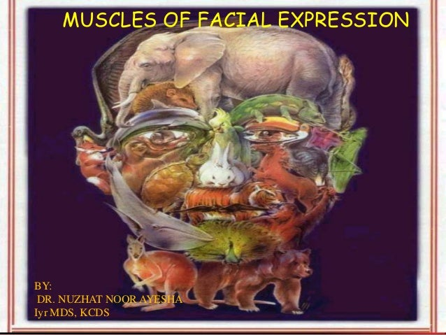 MUSCLES OF FACIAL EXPRESSION BY: DR. NUZHAT NOOR AYESHA Iyr MDS, KCDS