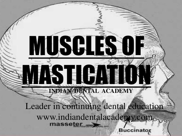 MUSCLES OF MASTICATIONINDIAN DENTAL ACADEMY Leader in continuing dental education www.indiandentalacademy.com www.indiande...