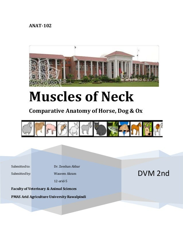 ANAT-102DVM 2ndMuscles of NeckComparative Anatomy of Horse, Dog & OxSubmitted to: Dr. Zeeshan AkbarSubmitted by: Waseem Ak...