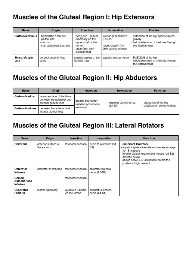 Muscles of the Gluteal Region I: Hip Extensors Name  Origin  Insertion  Innervation  Function  Gluteus Maximus - behind th...