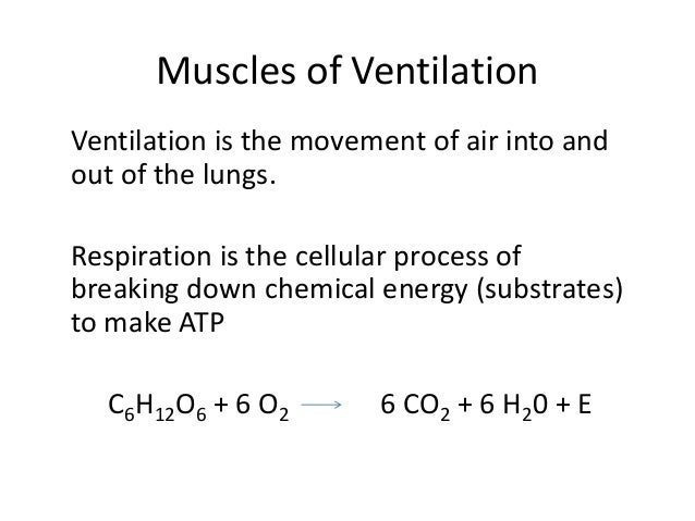 Muscles of Ventilation Ventilation is the movement of air into and out of the lungs. Respiration is the cellular process o...