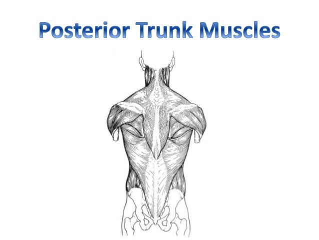 Muscular Anatomy (labeling packet)