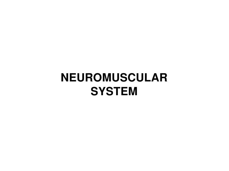 NEUROMUSCULAR SYSTEM<br />