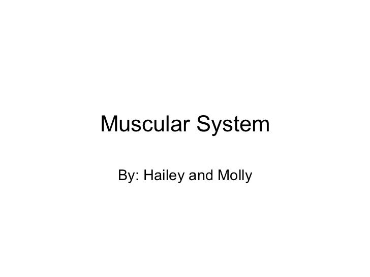 Muscular System By: Hailey and Molly