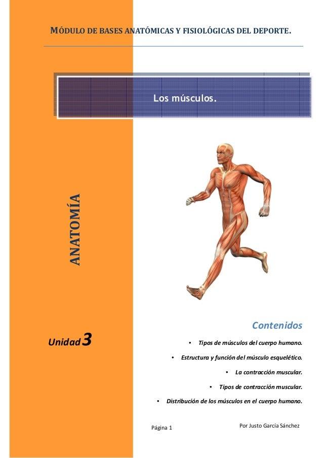 Página 1 Por Justo García Sánchez Contenidos • Tipos de músculos del cuerpo humano. • Estructura y función del músculo esq...