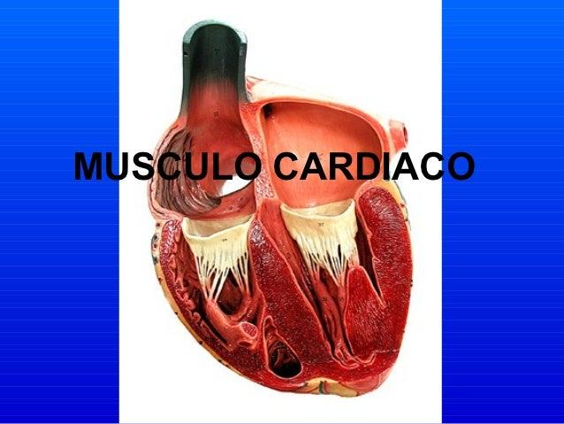 Musculo Cardíaco - UNERG