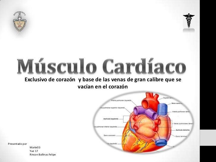 Exclusivo de corazón y base de las venas de gran calibre que se                                 vacían en el corazónPresen...