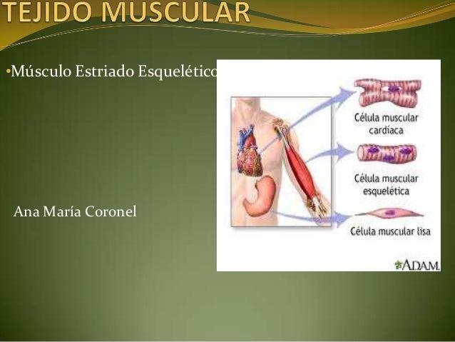 •Músculo Estriado Esquelético Ana María Coronel