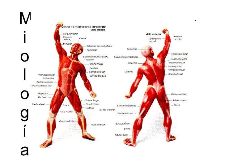Músculos enfermería