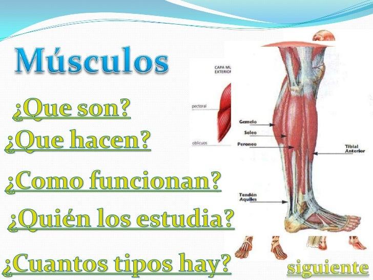 Las células musculares estriadas( músculosinvoluntarios), se ordenan en fibras que al juntarseforman un todo, se le llama ...