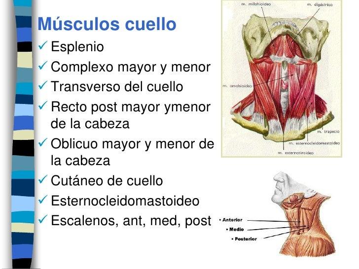 La medicina en las pastillas la osteocondrosis