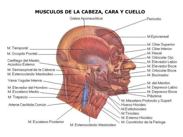 El dolor en los riñones a la posición horizontal