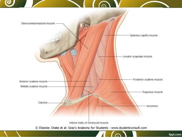 El tratamiento de la osteocondrosis urinoterapiey