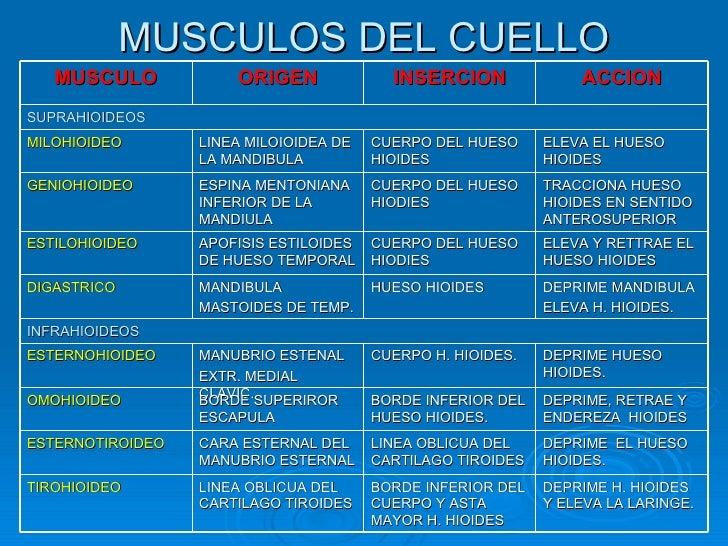 Musculos del cuerpo humano for Esternohioideo y esternotiroideo