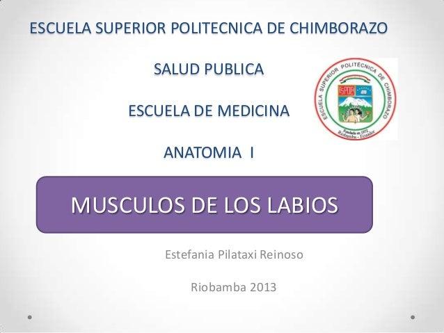 ESCUELA SUPERIOR POLITECNICA DE CHIMBORAZO SALUD PUBLICA ESCUELA DE MEDICINA ANATOMIA I  MUSCULOS DE LOS LABIOS Estefania ...
