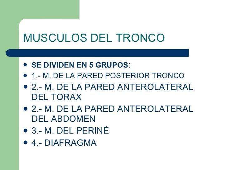 MUSCULOS DEL TRONCO <ul><li>SE DIVIDEN EN 5 GRUPOS : </li></ul><ul><li>1.- M. DE LA PARED POSTERIOR TRONCO </li></ul><ul><...