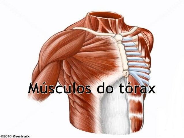 Musculos do tórax