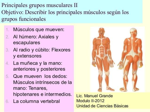 Principales grupos musculares II Objetivo: Describir los principales músculos según los grupos funcionales 1. Músculos que...