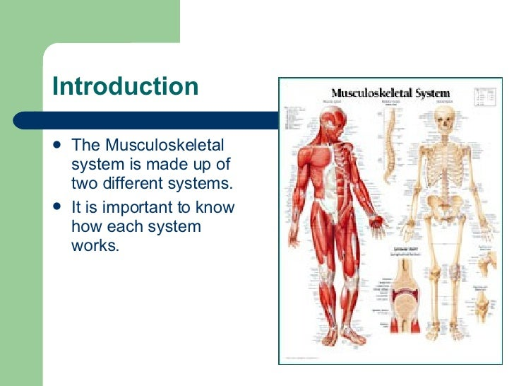 musculoskeletal system Demystify the ageing process and learn how our everyday behaviours are likely to affect our long-term musculoskeletal health.