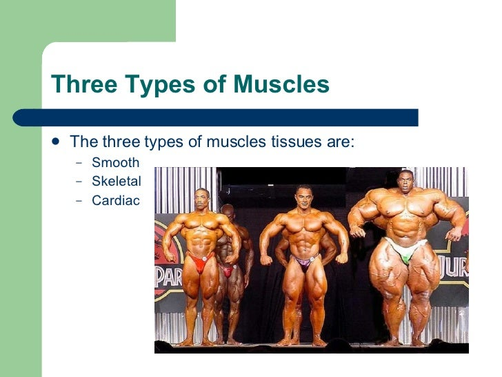 Three Types of Muscle Tissue Three Types of Muscles