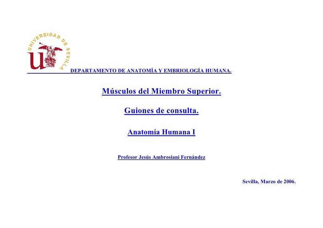 DEPARTAMENTO DE ANATOMÍA Y EMBRIOLOGÍA HUMANA.            Músculos del Miembro Superior.                 Guiones de consul...