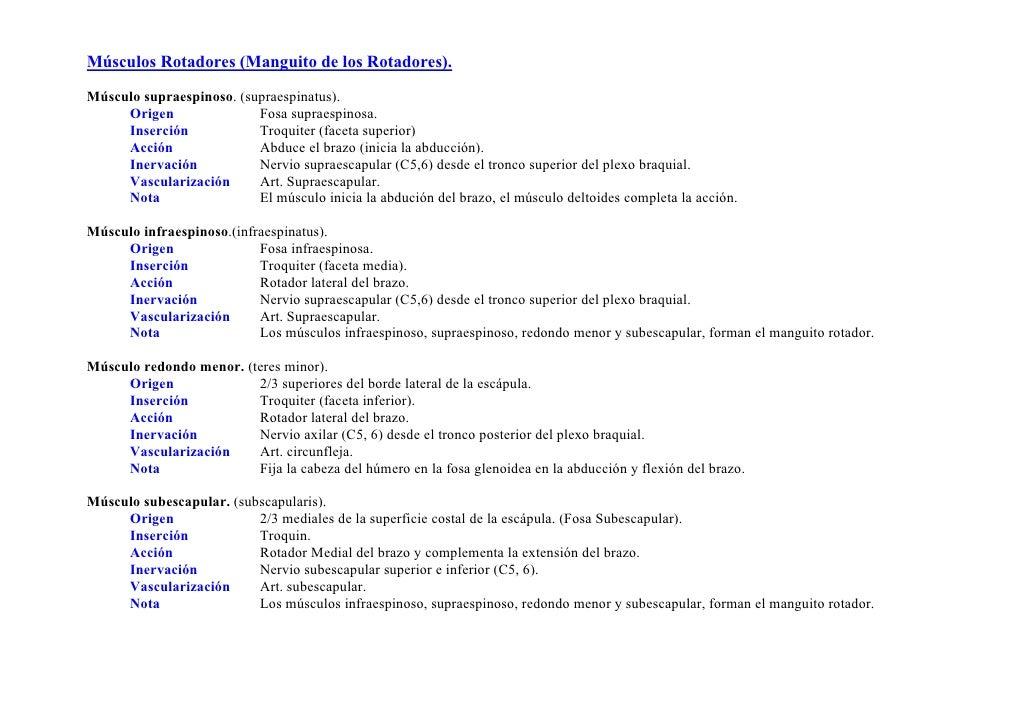 Sindrome de Manguito Rotador: ANATOMÍA DEL HOMBRO