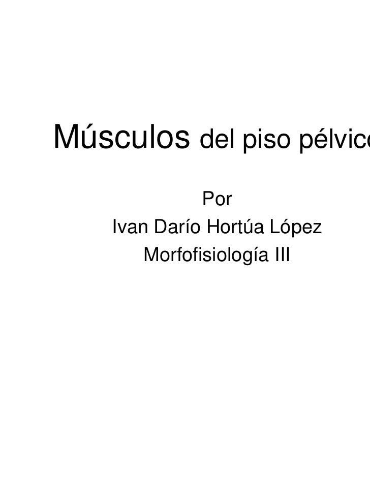 Músculos del piso pélvico               Por    Ivan Darío Hortúa López        Morfofisiología III
