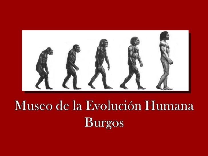 Museo evolución hombre..