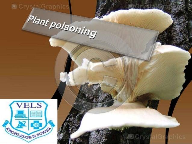 Mushroom poisoning