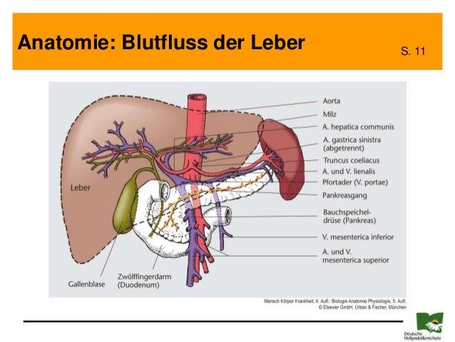Würmer im Blut und in der Leber