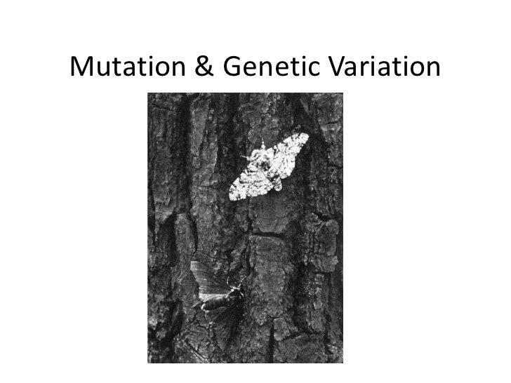 Mutation & Genetic Variation