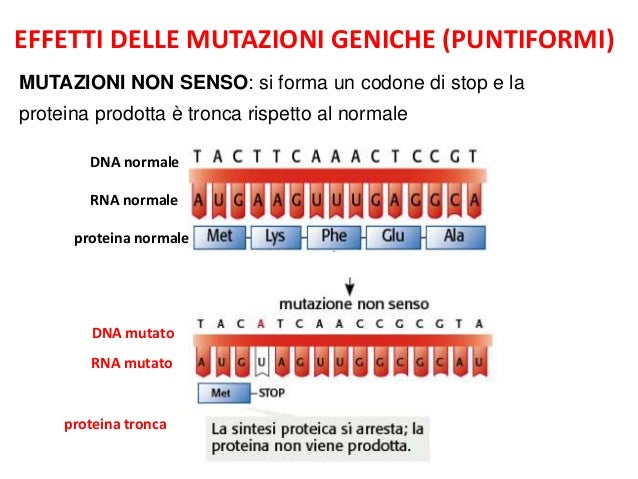 mutazioni-5-638.jpg?cb=1397197662