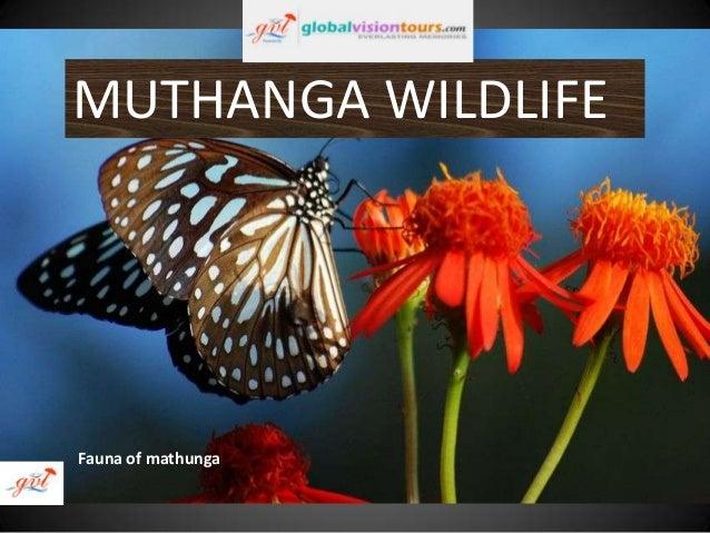 MUTHANGA WILDLIFE  Fauna of mathunga