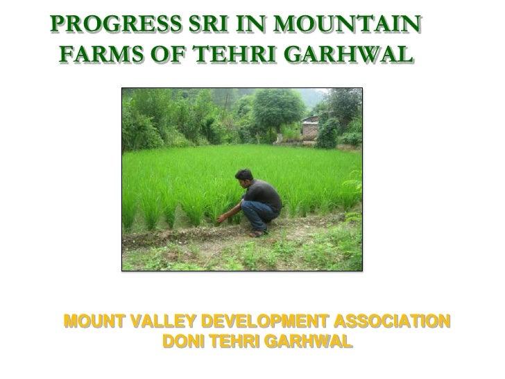 PROGRESS SRI IN MOUNTAIN FARMS OF TEHRI GARHWALMOUNT VALLEY DEVELOPMENT ASSOCIATION         DONI TEHRI GARHWAL
