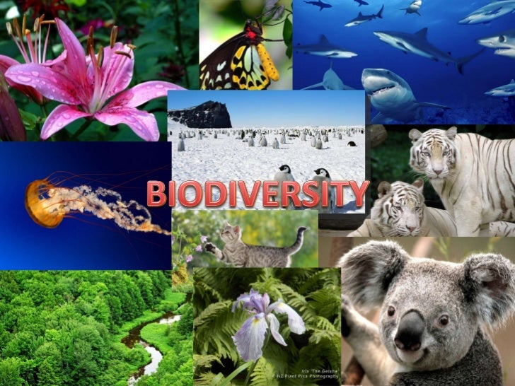 wildlife conservation and biology essay