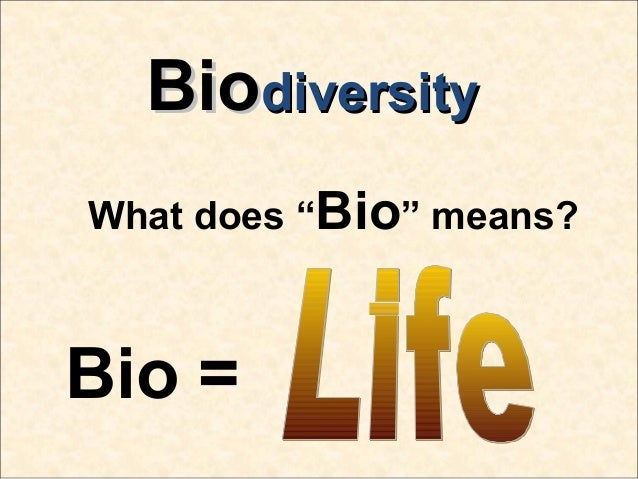 Bio Diversity Essay