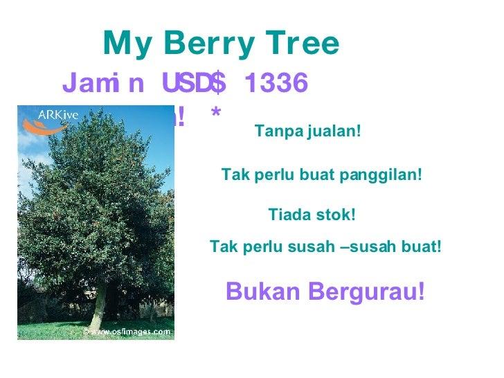 My Berry Tree Jamin USD$ 1336 sebulan! * Tak perlu buat panggilan! Tiada stok! Tak perlu susah –susah buat! Bukan Bergurau...
