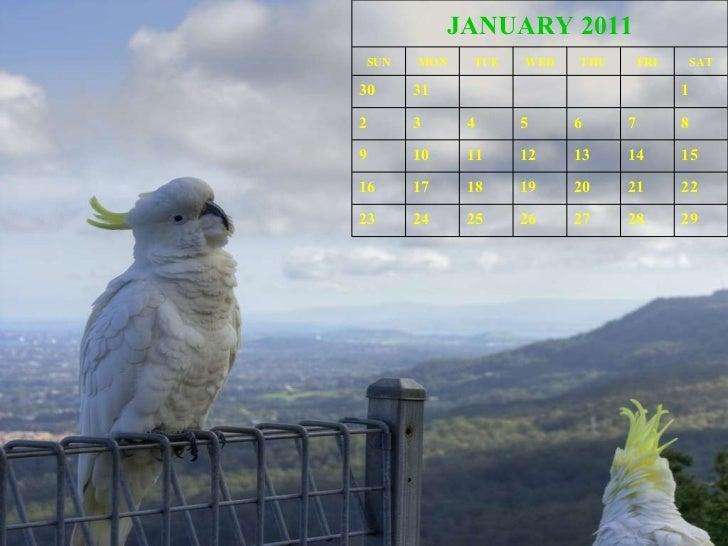 Wild Animals Calendar 2011