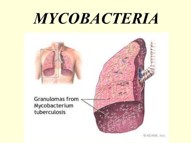 Mycobacteria - Prac. Microbiology