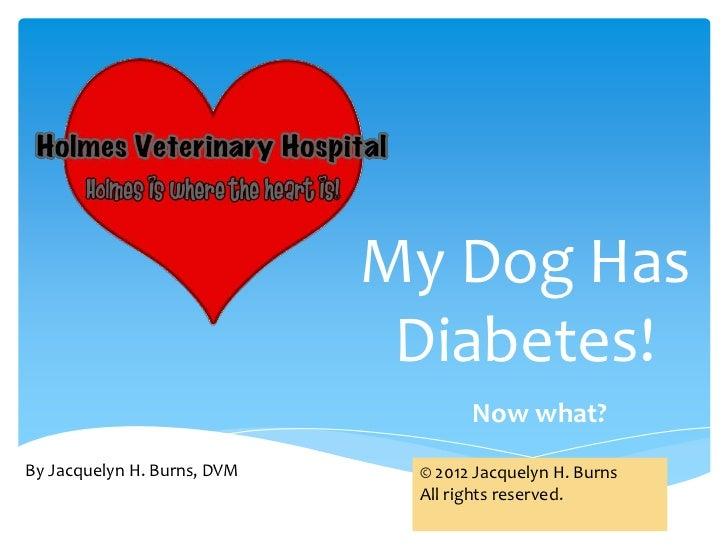 My dog has diabetes!