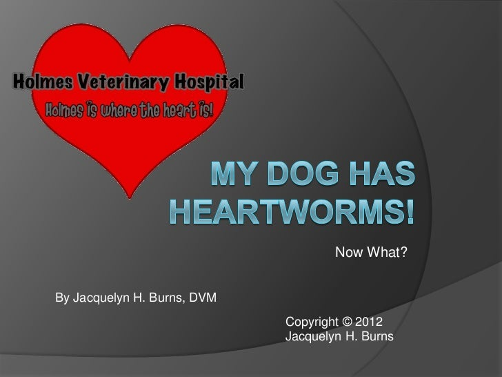 My dog has heartworms.  Now what?