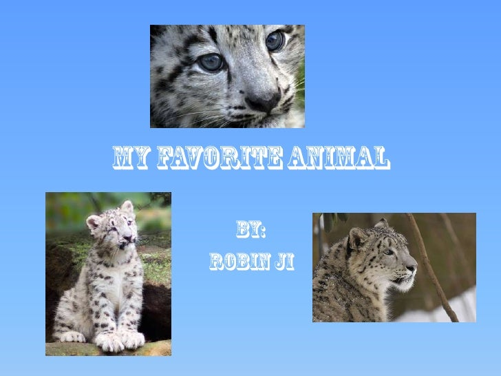 MY FAVORITE ANIMAL<br />By:<br />Robin Ji<br />