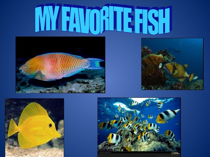 My Favorite Fish