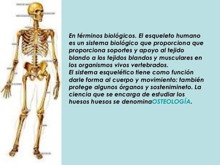 En términos biológicos. El esqueleto humano es un sistema biológico que proporciona que proporciona soportes y apoyo al te...