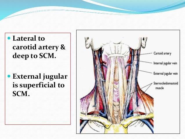 veins in neck