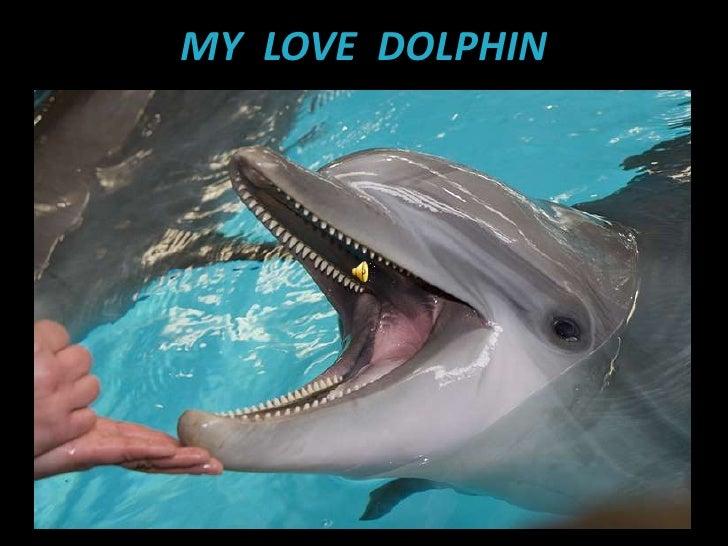 MY  LOVE  DOLPHIN<br />