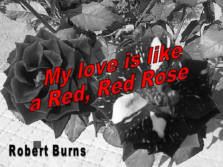 My love is like a Red, Red Rose  Robert Burns