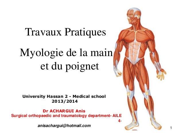 Travaux Pratiques Myologie de la main et du poignet University Hassan 2 - Medical school 2013/2014 Dr ACHARGUI Anis Surgic...