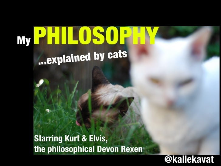 My   PHILOSOPHY      ...explained by cats     Starring Kurt & Elvis,     the philosophical Devon Rexen                    ...