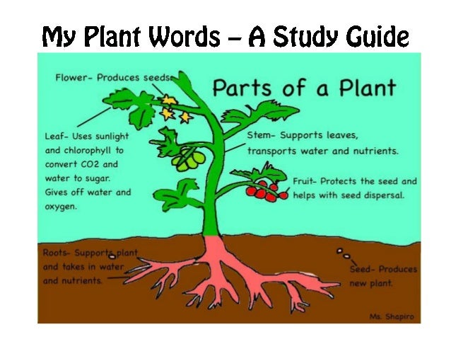 My Plant Words A Study Guide